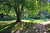 Verano en el parque (Franco D´Albao) Tags: francodalbao dalbao nikond60 park tree grass castrelos vigo verano summer sendero path