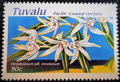 Dendrobium aff. involutum (Sylvio-Orquídeas) Tags: orquídeas orchids orchidaceae espécies species flores flowers selos stamps tuvalu dendrobium involutum