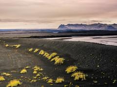 (ferinho) Tags: iceland islandia em5markii olympus