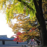 1011 AUTUMN COLORS thumbnail