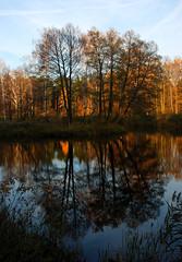 DSC_1972 (FMAG) Tags: 2017 żabieniec zalesie jesien