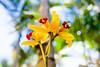 Amarelo radiante (Center Foto Produções) Tags: orquidea colorsinourworld