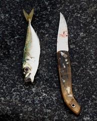 About fishing -b (T-Bachir) Tags: fishing knife sardine fish bait fishermanstool detail tool