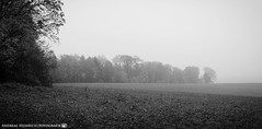 A gloomy day in November. (andreasheinrich) Tags: landscape field forest fog afternoon autumn november blackandwhite blackandwhitephotos rainy misty cold germany badenwürttemberg neckarsulm dahenfeld deutschland landschaft feld wald nebel nachmittag herbst schwarzweis regnerisch neblig kalt nikond7000