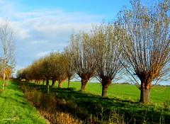 Landscape with trees (JaapCom) Tags: jaapcom trees bomen clouds green landscape landschap landschaft natural dutchnetherlands holland nature nikond5100 polder paysbas