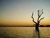 Dead tree on the lake at sunset (phuong.sg@gmail.com) Tags: age agriculture alone autumn background bare black blue branch cloud color country countryside dark dramatic drought dry environment field grass horizon landscape lone lonely meadow natural nature outdoor plant rural season silhouette single sky solitude spring summer sun tree trunk weather wood