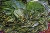 Tea Leaves, Nuwara Eliya, Sri Lanka (bfryxell) Tags: market nuwaraeliya srilanka tealeaf tealeaves