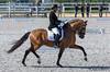 Lusitano horse (JOAO DE BARROS) Tags: barros equestrian joão horse lusitano