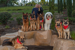 Family Photo (Nicholas LaCroix Photography) Tags: dogs dog germanshepard family portrait k9 rock slope trees animals animal fur bandana