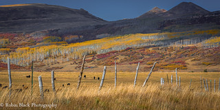 Pastures and Aspen, Uncompahgre Plateau