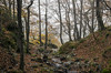 Niebla (Alcides Jolivet) Tags: hayedodesantacruzdelvalleurbion urbion hayedo burgos otoño