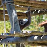 On the Lookout (Lisbon Zoo) thumbnail
