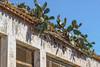 Grupo escolar (Alejandro González i Mas) Tags: arquitectura monnegre alacant escuela grupoescolar abandoned naturephotography chumberas