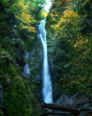 Narrow Falls (flashfix) Tags: october242017 2017inphotos victoria bc britishcolumbia canada nikond7100 nikon goldstreampark nature leaves moss sunlight forest bokeh yellow green branches woods 28mm landscape panorama trees flashfix flashfixphotography waterfall longexposure
