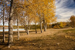 Wanderings (catmccray) Tags: chatfieldstatepark lake fall autumn yellowleaves