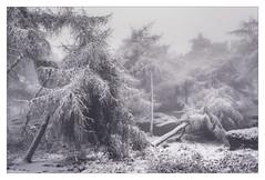 A Bitter End (Dave Fieldhouse Photography) Tags: staffordshire winter trees woodland forest tree peakdistrict peaks fuji fujifilm fujixt2 mist fog foggy cold frozen ice snow snowy landscape wilderness wwwdavefieldhousephotographycom