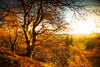 Blinded by the Light (Augmented Reality Images (Getty Contributor)) Tags: woodland longexposure perthshire landscape leefilters scotland nature autumn trees sunshine countryside canon leaves forest light bridgeofearn unitedkingdom gb