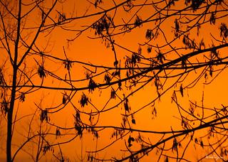 Orange sky - Ciel orangé
