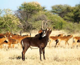 Namibia Hunting Safari 47