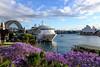 At Berth - Circular Quay (PaulBalfe) Tags: bravocruise circularquay radianceoftheseas sydney ship harbourbridge jacaranda