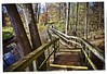 Rattray Marsh Mississauga Ontario! (Spiro Anassis) Tags: forest trees march sanassis leica