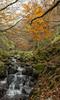 Arroyo Urbion (Alcides Jolivet) Tags: urbion hayedodesantacruzdelvalleurbion burgos hayedo otoño autumn