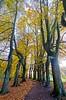 Herfst (13) Lede (Johnny Cooman) Tags: lede vlaanderen belgië bel natuur herfst ベルギー flemishregion flandre flandes flanders flandern belgium belgique belgien belgia autumn flora bélgica aaa flhregion panasonicdmcfz200 oostvlaanderen eastflanders otoño herbst automne tree boom baum arbre vertorama