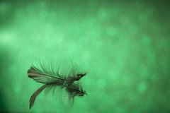 Envy (alideniese) Tags: 7dwf crazytuesdaytheme greenandblack macro closeup bokeh colour colourful green feather black delicate envy jealousy reflection alideniese one single alone light greenblack