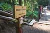 Murat's Bridge (johnwporter) Tags: hiking scramble climbing cascades mountains stateforest issaquahalps tigermountain 徒步 爬行 攀登 喀斯喀特山脈 山 州立森林 伊薩闊阿爾卑斯 虎山