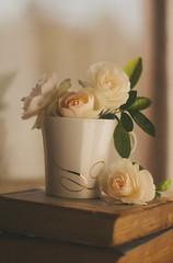 Morning Sun (Inka56) Tags: letthesunshinein flickrfriday roses cup book pentaxart pentaxm 7dwf hbw