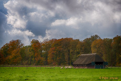 de schaapskooi (www.petje-fotografie.nl) Tags: arnhem bomen gelderland ptjefotografie bos herfst kleuren