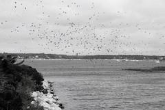 Tidal Inlet - Falmouth, Massachusetts (RockN) Tags: tidalinlet atlanticocean september2016 falmouth capecod massachusetts newengland