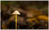 Wild mushrooms (spencerrushton) Tags: spencerrushton spencer rushton canon canonlens canonl colour 100mm canon100mmf28lmacroisusm efcanon100mmf28lmacroisusm reflector canon5dmkiii 5dmkiii 5dmk3 fungi mushroom toadstool garden gardens autumn plant park purpleport beautiful nature uknature manfrotto manfrottotripod macro green brown walk wood windsor windsorgreatpark windsoruk ruleofthirds dethoffield daylight day dslr dof availablelight lightroom raw woods small