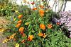 Weimar am 15.10.2017 (pilot_micha) Tags: 15102017 blume blumengarten blüte deutschland garten goethesgarten herbst oktober2017 pflanze statdt thüringen weimar autumn blossom city flower kreisfreiestadt plant de