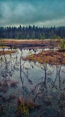 Swamp View 2 (Topolino70) Tags: lumia 930 mobile swamp bog suo neva mättäät lampi vesi puu metsä taivas synkkä cloudy ominous henttaa espoo finland