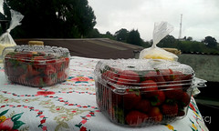 Comprando fresas y queso de altura, bajo la lluvia/ Buying strawberries and cheese from the highlands, under the rain (vantcj1) Tags: fresas fruta queso comida mesa paisaje lluvia rocío vegetación caminata antena vivienda techo árbol campo rural mantel