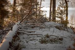 20171115003664 (koppomcolors) Tags: koppomcolors värmland varmland vinter winter skog forest sweden sverige