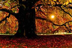 Barbieux ( Nord France ) (Méziane R. Photography) Tags: mezianerahemphotographie soleil couleurs automne autum feuilles eau
