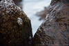 Oysters (exploreslk) Tags: dondra lighthouse matara south beautiful highest srilanka
