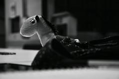solitário (medeirosisabel16) Tags: peb bw preto branco black white horse cavalo schoolbag school escola mochila study solitário lonely
