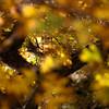 In Canyons 150 (noahbw) Tags: d5000 dof grandstaircaseescalantenationalmonument nikon utah williscreek abstract autumn blur bokeh branches canyon depthoffield desert light natural noahbw shadow slotcanyon square sunlight trees incanyons