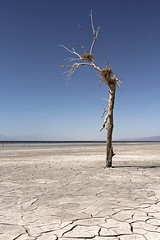 The end (windyhill623) Tags: saltonsea mud mudflat tree deadtree nest lake saltflat shore shoreline california usa unitedstates landscape outdoor