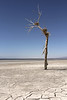 The end (windyhill623) Tags: saltonsea mud mudflat tree deadtree nest lake saltflat shore shoreline california usa unitedstates landscape outdoor