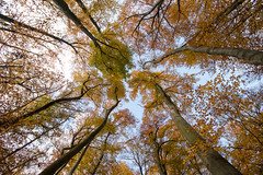 Look up and smile (Paul van Agthoven) Tags: autumn canon forest eifel germany europa natgeo nature trees tree leafs colours 1018 canon80d explore