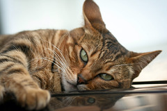 Time to relax (katjacarmel) Tags: animal chat gato kat kitten cute car outside nature relax chill sleep green eyes dieren huisdier katze poes auto closeup lines stripes monday