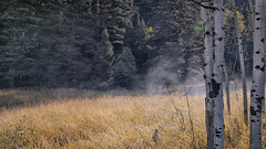 Morning Mist on the Meadow (Mark P Betts) Tags: newmexicogeologicalsociety ourayperimetertrail potatomeadow 2017 nmgs fall field conference 2017nmgsfallfieldconference