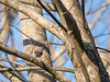 Tufted titmouse (When Photographed) Tags: tuftedtitmouse titmouse tufted titmice chickadee tree bird sky nature wildlife photography panasonic g85 800mm