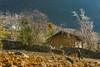 _J5K9601.0210.Thái Phìn Tủng.Đồng Văn.Hà Giang (hoanglongphoto) Tags: asia asian vietnam northvietnam northeastvietnam landscape scenery vietnamlandscape vietnamscenery vietnamscene landscapewithpeople spring village house home tree hillside people labour canoneos1dsmarkiii canonef70200mmf28lisusm đôngbắc hàgiang đồngvăn tháiphìntủng phongcảnh bantlàng mùaxuân sườnđồi cây phongcảnhcóngười càyruộng hoamận hoađào bảnlàngmùaxuân mùaxuânvùngcao mùaxuânhàgiang