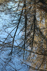 IMG_5567 Reflections 2 (Jon. D. Anderson) Tags: tree reflection water nisquallynationalwildliferefuge