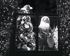 Xmas 17 (2) (Alan Butler) Tags: hp5 3200 push xtol 4x5 grapevine speedgraphic pushprocessing